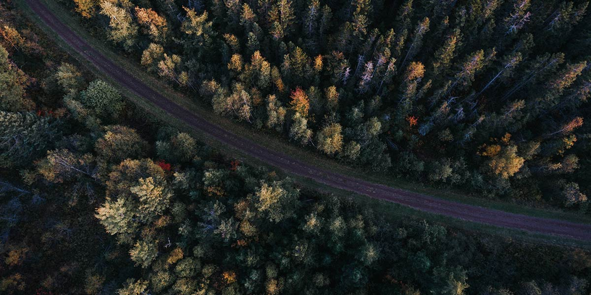 Aerial photo of forest trees with a road in the middle