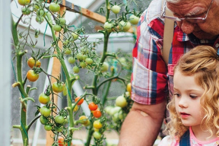 Grandfather picking tomatoes with granddaughter - Rathbone Investment Management