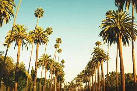 View of palm trees in LA