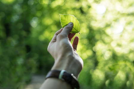 Hand holding a leaf against a green background